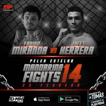 Mandarina Fights 14
