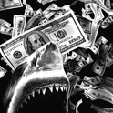 MMA Bet Sharks