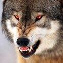 robbthewolf