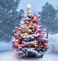Huwhite Christmas